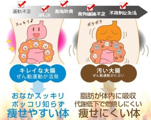 シェイプアップ乳酸菌の効果は嘘?口コミや楽天で評価されている乳酸菌のダイエット効果とは!
